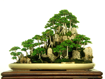Rudi Julianto's Bonsai